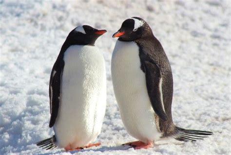 the fall penguin modern b00gedd414 14 best penguins images on penguin penguins