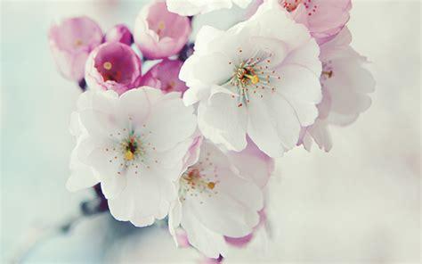 wallpaper bunga untuk garskin tips tips kesehatan untuk anda 30 wallpaper bunga paling