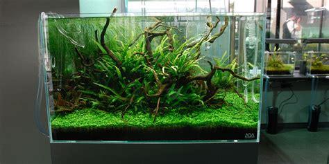 Aquascaping With Driftwood by Aquascape Adana Driftwood Garden Bonsai Aquascape