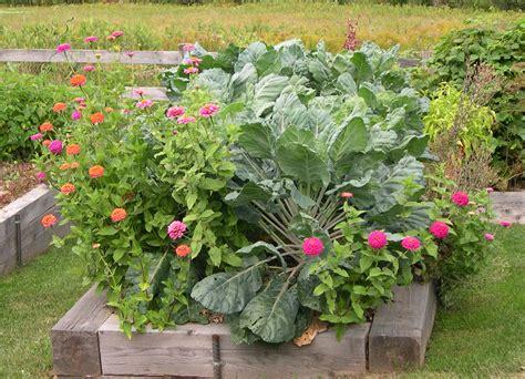 Harriet's vegetable garden in Maine   Fine Gardening
