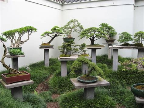 651 Best Bonsai Images On Pinterest Bonsai Bonsai Trees Bonsai Rock Garden