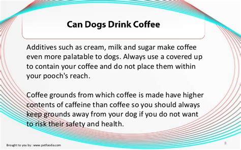 can dogs drink coffee can dogs drink coffee