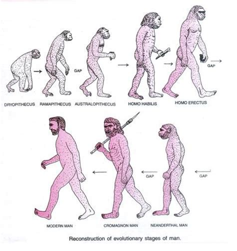 the rise of sapiens the evolution of modern thinking books evolution of morphological changes involved in