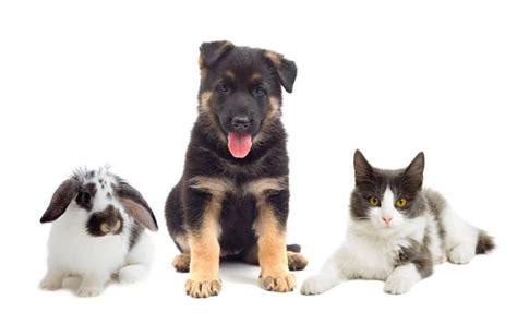 members puppy food pet food institute touts members sustainability efforts petfoodindustry