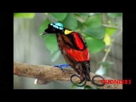 imagenes mas bellas del mundo las aves mas hermosas del mundo imagenes recopilacion los