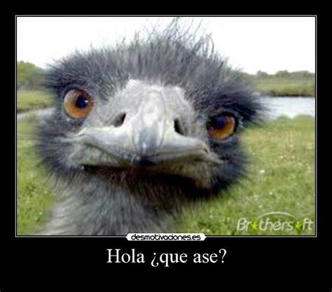 Imagenes Hola Que Ase | hola 191 que ase desmotivaciones