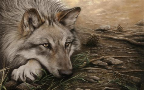 of a wolf beautiful wolf 719147 walldevil