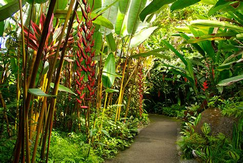 Hawaii Tropical Botanical Garden by Top 5 Activities For On The Big Island Hawaii