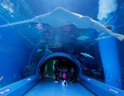 japanese aquarium japan tokyo aquarium gallery