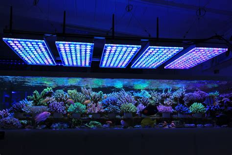 Led Aquarium Lighting aquarium led lighting photos reef and planted aquarium