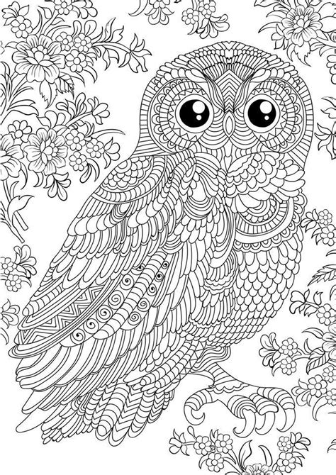 coloring pages adults owl 1928841 10156534814880045 8464913795688162808 n jpg 679