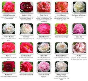 colors of peonies peonies by color via hyperactive farms flower peonies