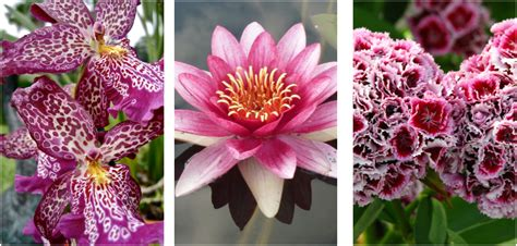 top 10 most popular flowers flowers gardening are these the worlds top 13 most beautiful flowers page