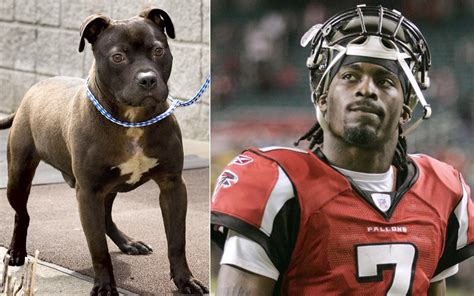 michael vick fighting michael vick sentenced to prison for dogfighting photos sports throughout
