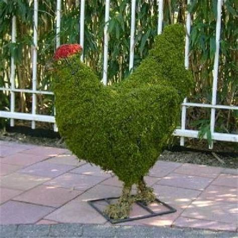 Whole Chicken Evergreen topiaries chicken and frames on