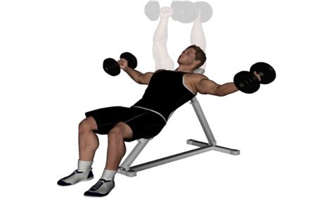 dumbbell bench fly dumbbell bench fly 28 images dumbbell incline fly with