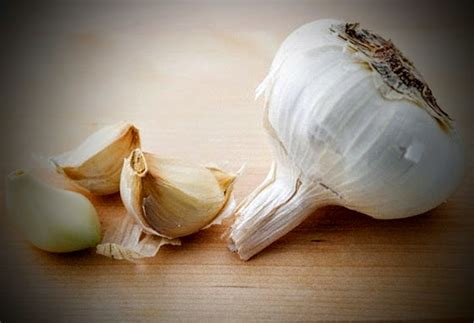 is garlic poisonous to dogs vet my has eaten garlic what to do