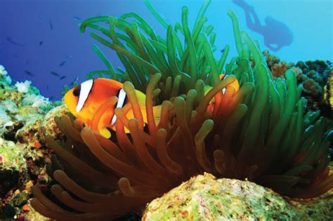 dive dahab scuba diving in dahab sharm vacations excursions
