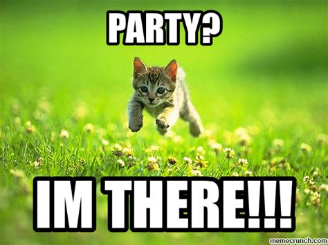 Meme Party - cat party cat meme