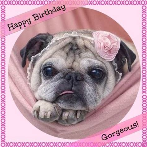 pug birthday wishes best 25 happy birthday pug ideas on