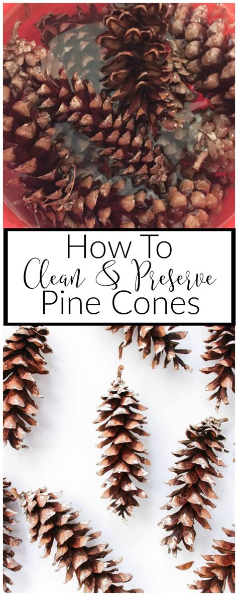 how to clean and preserve pine cones domestically creative