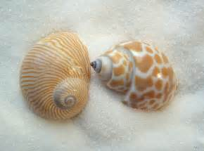 when a little post about shells gets big visits