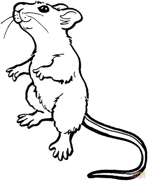 coloring pages mouse and the motorcycle mouse standing up coloring page free printable coloring