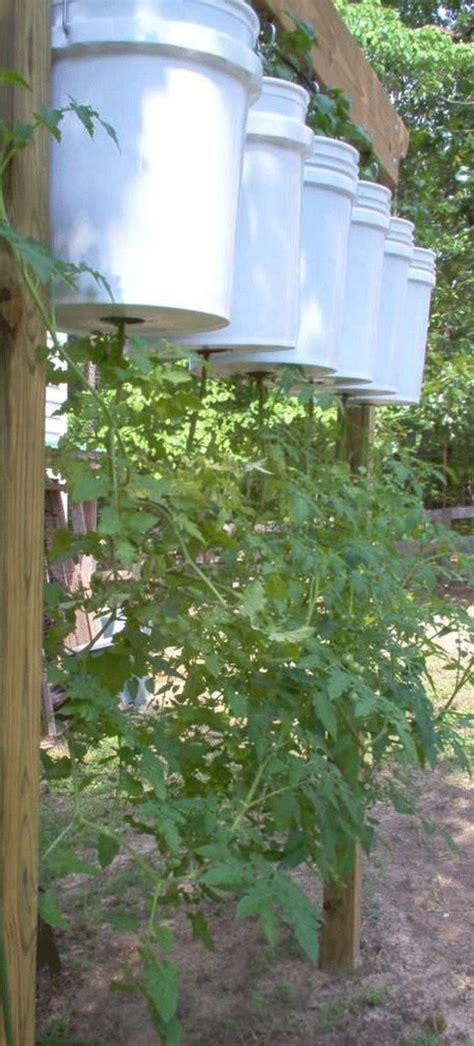 Tomato Garden Ideas Tomato Garden Vegetable Garden And Garden Ideas On