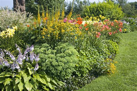 drought tolerant flowering shrubs socal landscaping 5 drought tolerant plants for your yard