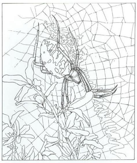 Garden Spider Coloring Page Kleurplaten En Zo 187 Kleurplaat Spin