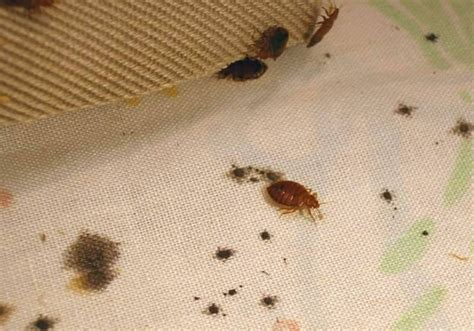 bugs in bathroom at night forget bedbugs these bugs are more common and more