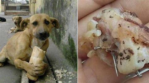 upaya pembunuhan anjing liar    kejam