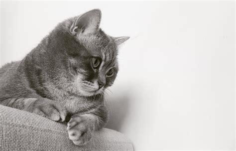 stock photo  adorable animals cats