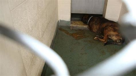 miami dade shelter petition 183 change the horrible conditions at the miami dade animal services shelter