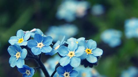 s3 wallpaper flower name blue flowers names and meanings 23 desktop wallpaper