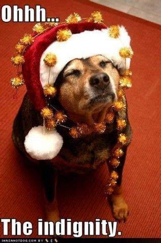 jingle bells happy holidays wwwcapemaydogscom christmas dog crazy dog lady crazy dog