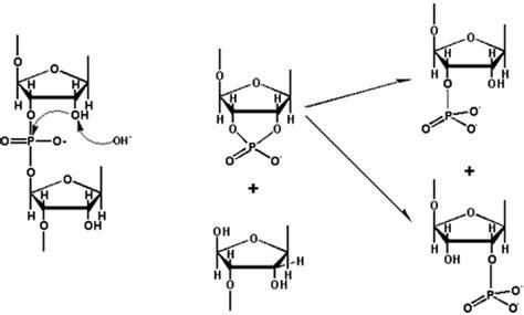 t protein ur random i i s s altamura molecole in movimento