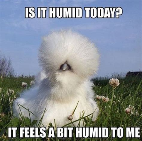 Funny Beauty Memes - 30 memes de belleza que te har 225 n llorar de la risa cut