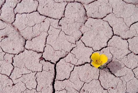 el pas donde florece tiempo de florecer el secreto de todo exito es ser feliz ley de atraccion desarrollo del