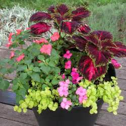 south central gardening container garden ideas for tx and ok