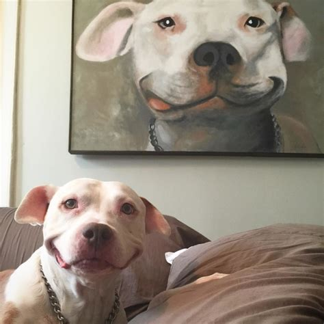 Smiling Dog Meme - pit bull of the week smiling brinks