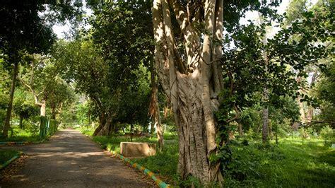 Up Botanical Garden Botanical Gardens In Kolkata Expedia