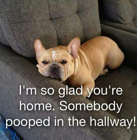 French Bulldog Meme - the 25 best bulldog meme ideas on pinterest french