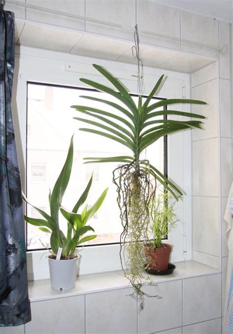 umzug mit zimmerpflanzen im winter 187 majas pflanzenblog