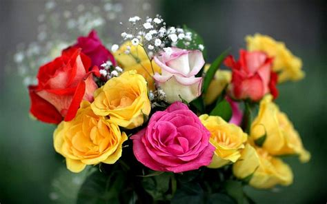 imagenes de hola con rosas im 193 genes de flores 174 fotos de rosas margaritas o lirios