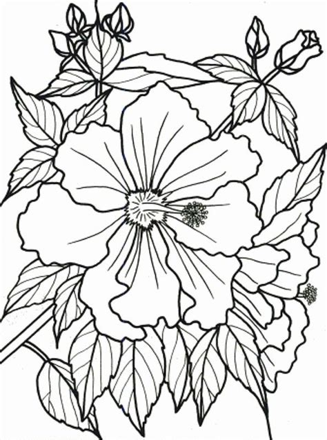 free coloring pictures of tropical flowers tropical flower coloring pages to print color bros