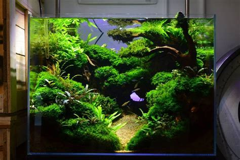 aquascapes online favourites display tank at exotic aquatic amazing scenery