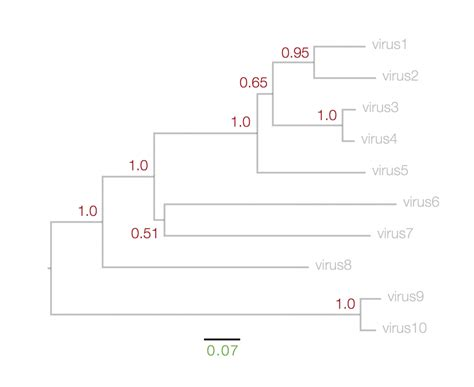time trees directions how to read a phylogenetic tree epidemic