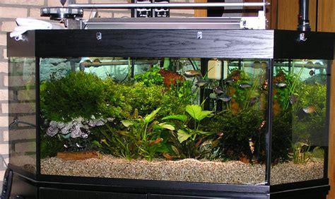 beleuchtung 60l aquarium aquarium juwel 500l aquarium 350 litres 28 images corner