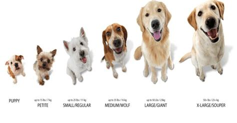 small sized dogs how does sizes matters